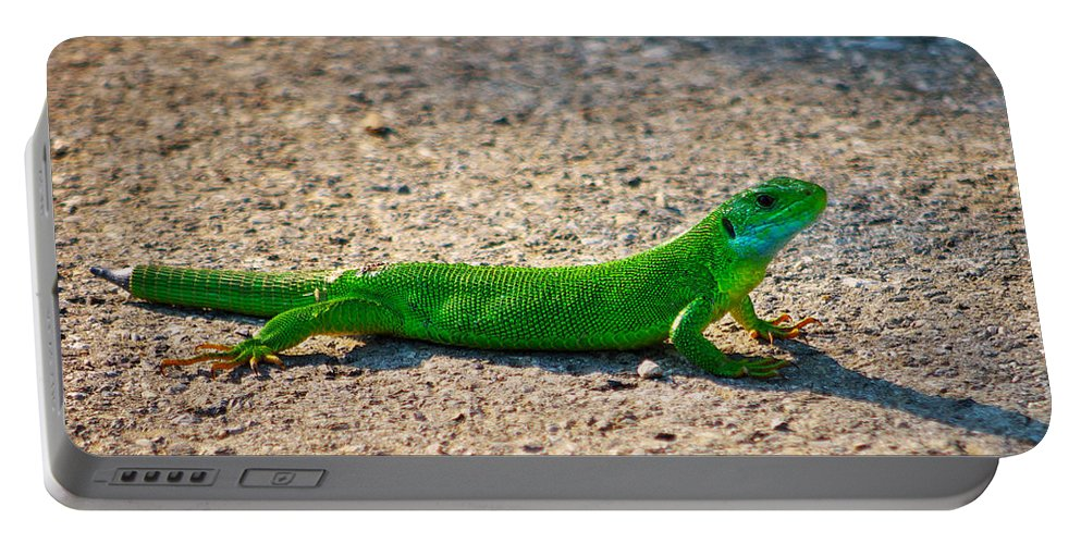 Lacerta Portable Battery Charger featuring the photograph Green Lizard by Ivan Slosar