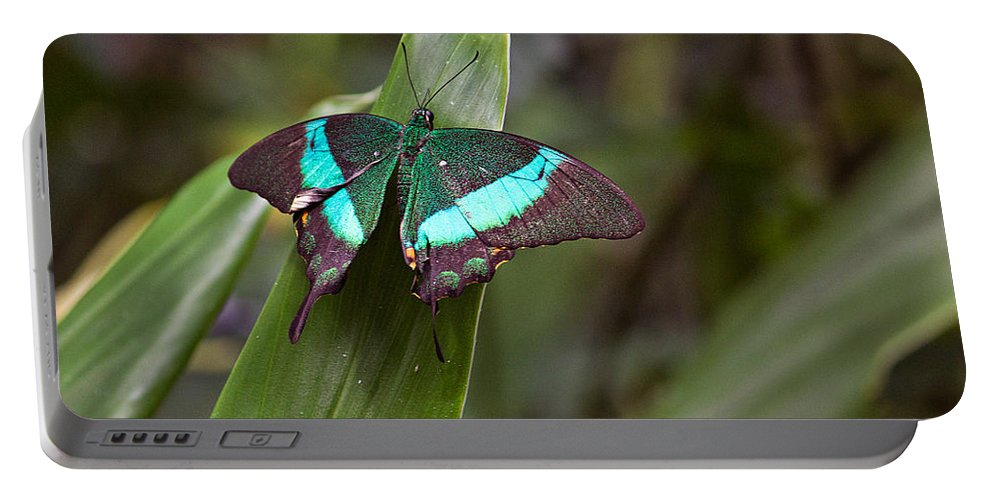 Insect Portable Battery Charger featuring the photograph Green Moss Peacock Butterfly by Peter J Sucy