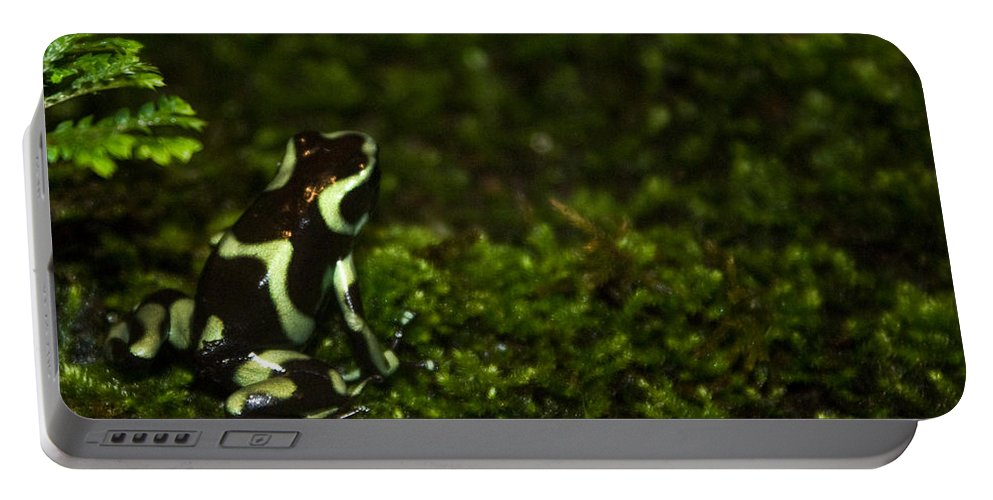 Frog Portable Battery Charger featuring the photograph Green Poison Dart Frog by Douglas Barnett