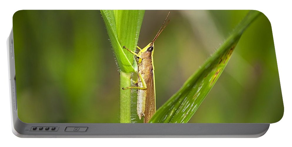 Grasshopper Portable Battery Charger featuring the photograph Green Slantfaced Grasshopper by Kenneth Albin