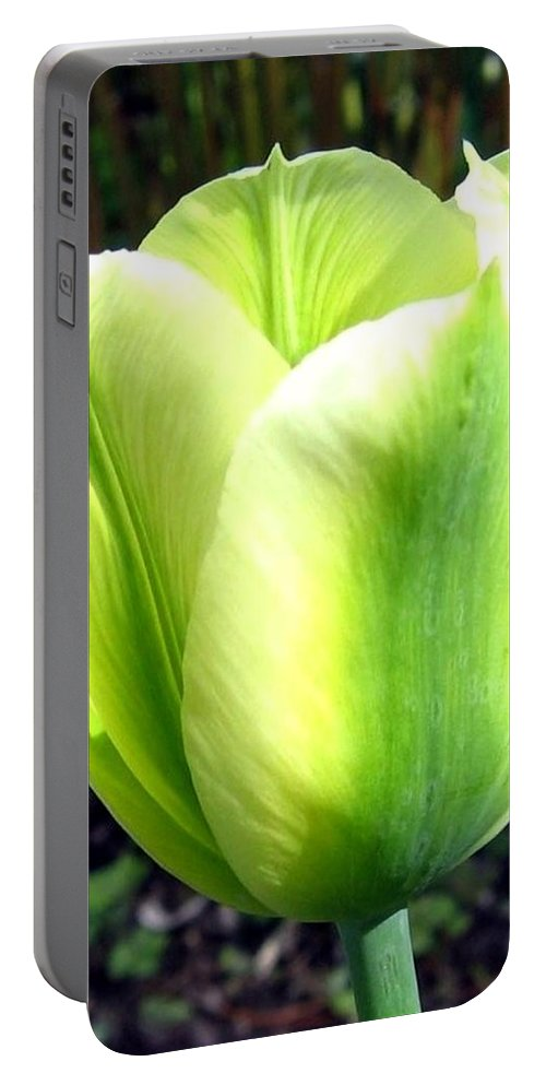Tulip Portable Battery Charger featuring the photograph Green Tulip by Will Borden
