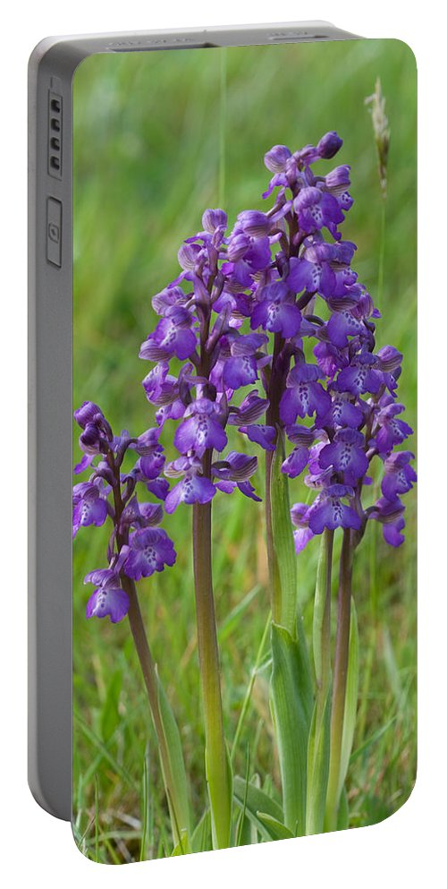 Orchid.flower Portable Battery Charger featuring the photograph Green-winged Orchids by Bob Kemp