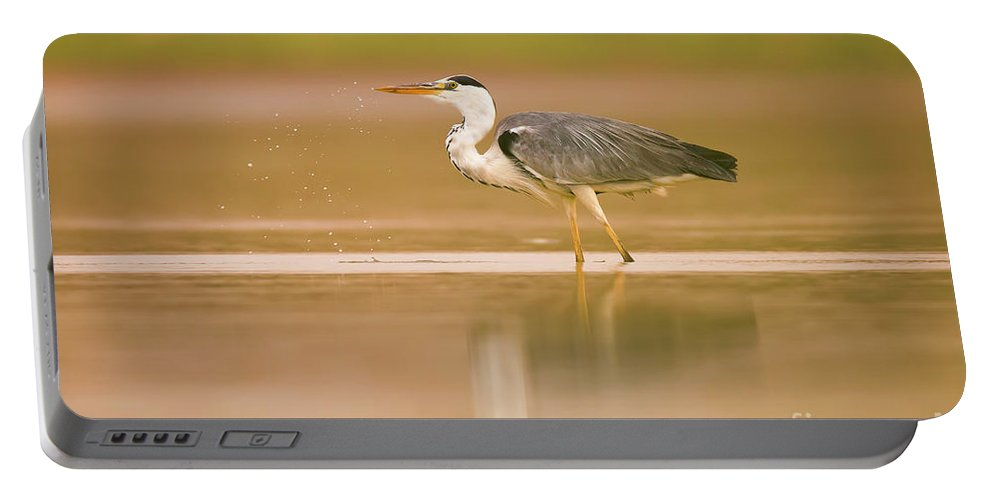 Grey Heron Portable Battery Charger featuring the photograph Grey Heron Ardea Cinerea by Alon Meir