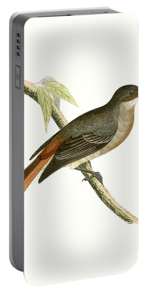 Bird Portable Battery Charger featuring the painting Grey Redstart by English School