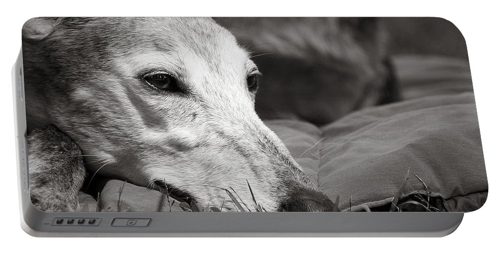 Editorial Portable Battery Charger featuring the photograph Greyful by Angela Rath