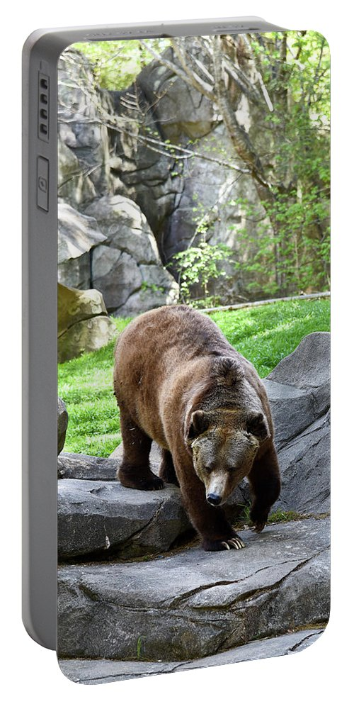 Grizzly Portable Battery Charger featuring the photograph Grizzly by Sherri Johnson