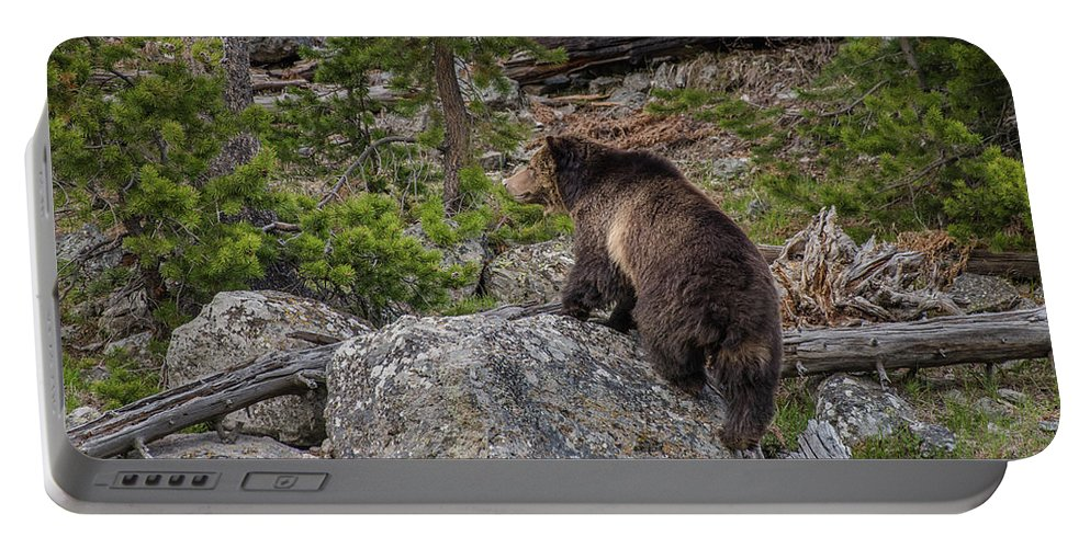Grizzly Sow Portable Battery Charger featuring the photograph Grizzly Sow In Yellowstone Park by Yeates Photography