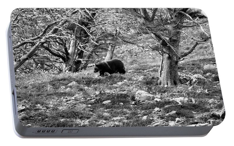 Glacier National Park Portable Battery Charger featuring the photograph Grizzly Walking Through Dead Trees - Black And White by Mark Kiver