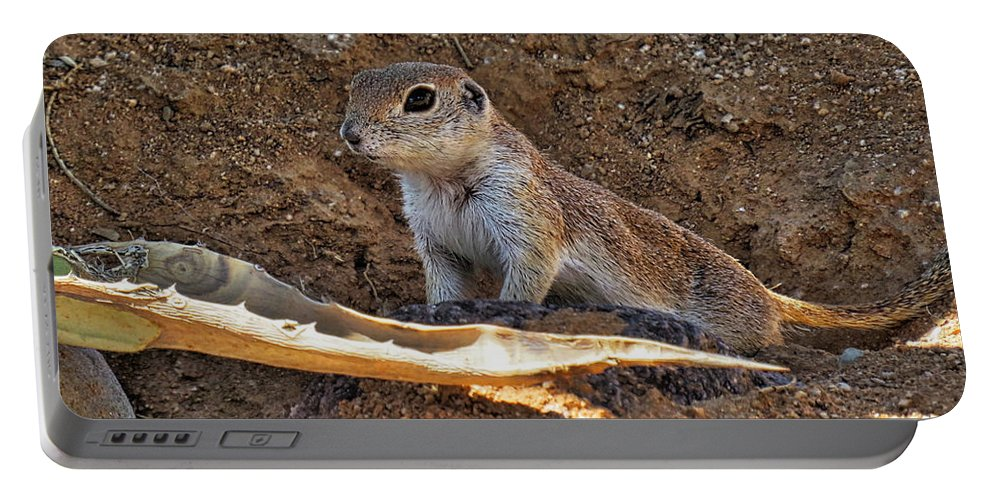 Squirrel Portable Battery Charger featuring the photograph Ground Squirrel by Beth Morris