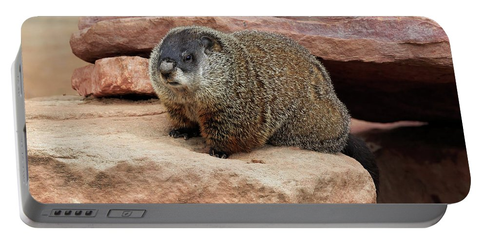 Groundhog Portable Battery Charger featuring the photograph Groundhog by Louise Heusinkveld