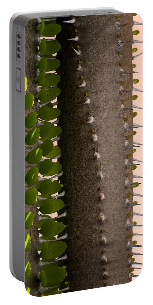 Cactus Portable Battery Charger featuring the photograph Growth Contrast 2 by Kelley King