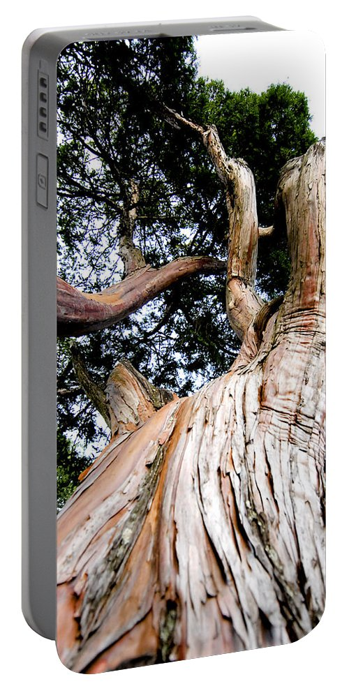 Tree Portable Battery Charger featuring the photograph Growth by Greg Fortier