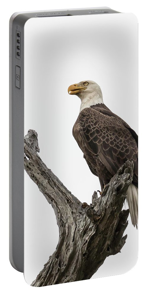 Birds Portable Battery Charger featuring the photograph Guarding The Nest by Tony Fruciano