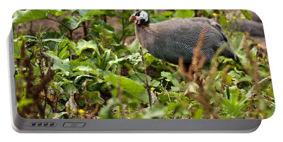 Galliformes Portable Battery Charger featuring the photograph Guineafowl 3 by Douglas Barnett