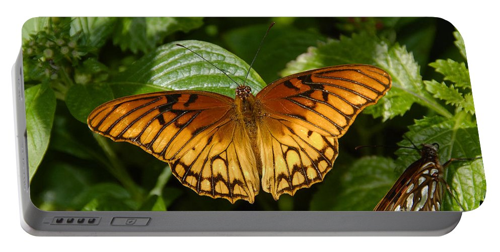 Gulf Fritillary Portable Battery Charger featuring the photograph Gulf Fritillary by David Lee Thompson