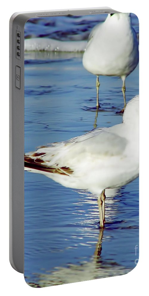 Birds Portable Battery Charger featuring the photograph Gull - Beach -reflection by D Hackett