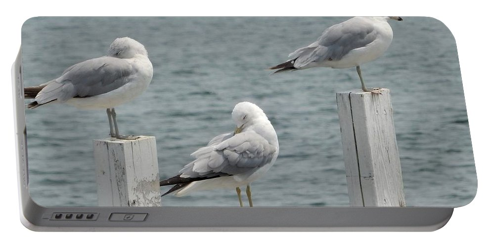 Seaside Seagulls Portable Battery Charger featuring the photograph Gulls At Rest by Jeanette Lamberti