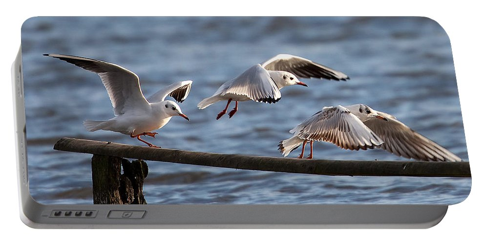 Gulls Portable Battery Charger featuring the photograph Gulls by Bob Kemp