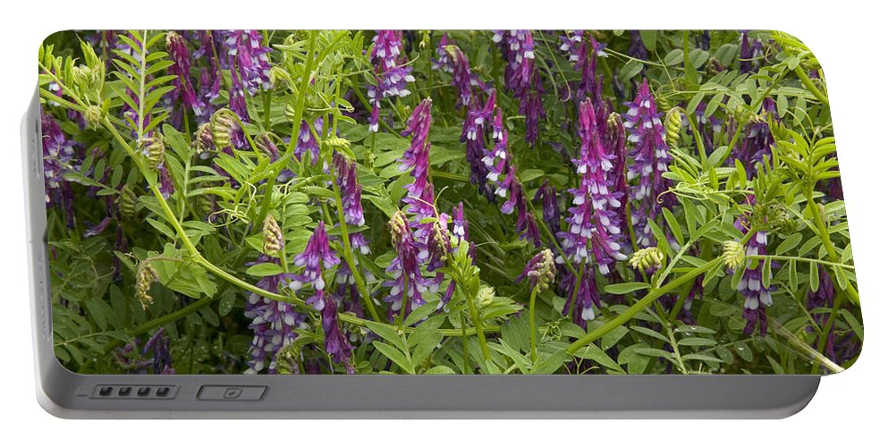 Vetch Portable Battery Charger featuring the photograph Hairy Vetch by Inga Spence