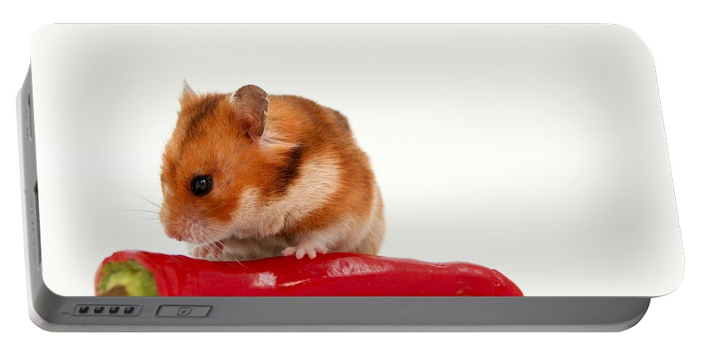 Hamster Portable Battery Charger featuring the photograph Hamster Eating A Red Hot Pepper by Yedidya yos mizrachi