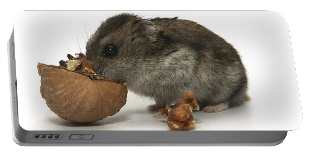 Hamster Portable Battery Charger featuring the photograph Hamster Eating A Walnut by Yedidya yos mizrachi