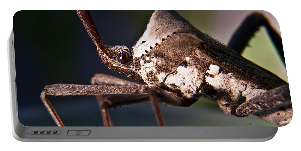 Hemiptera Portable Battery Charger featuring the photograph Handsome Bug by Douglas Barnett