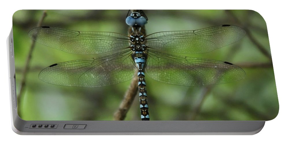 Dragon Portable Battery Charger featuring the photograph Hang Out by Donna Blackhall