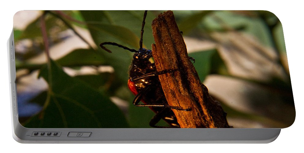 Beetle Portable Battery Charger featuring the photograph Hanging On For Life by Douglas Barnett