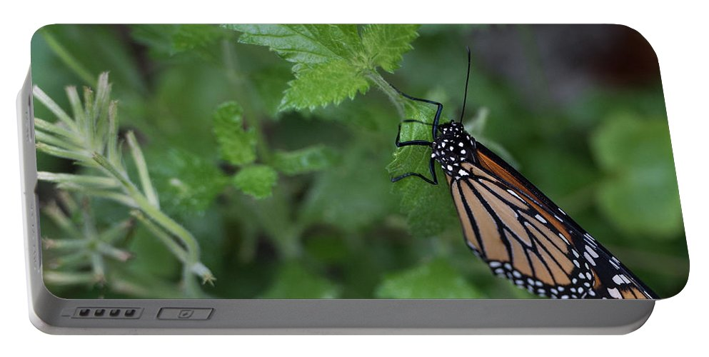 Butterfly Portable Battery Charger featuring the photograph Hanging On by Wesley Farnsworth