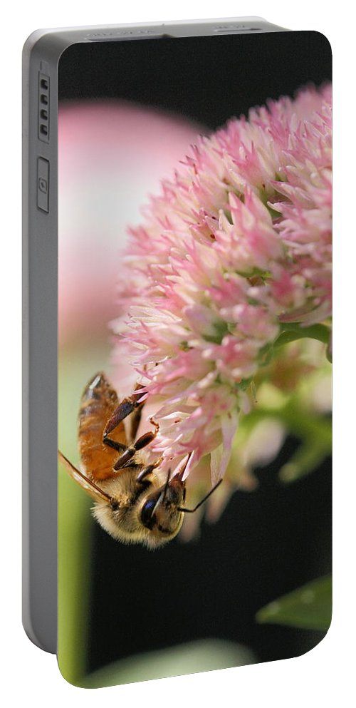 Bee Portable Battery Charger featuring the photograph Hanging Out by Angela Rath