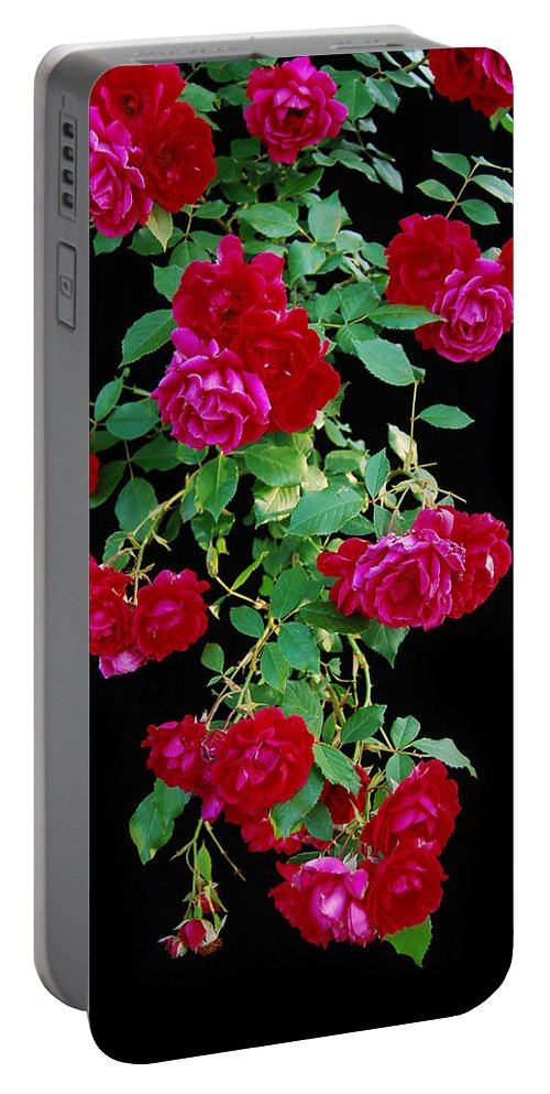 Rose Portable Battery Charger featuring the photograph Hanging Roses 2593 by Michael Peychich