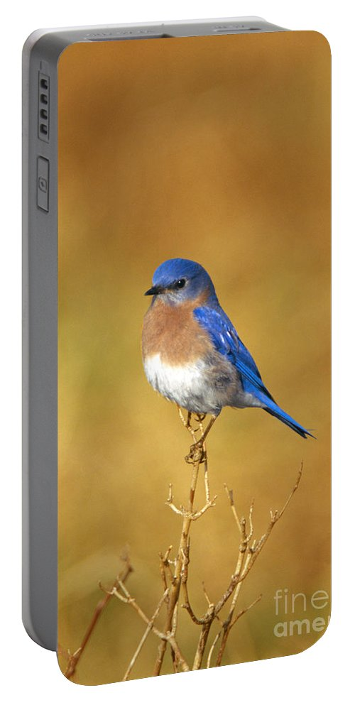 Bird Portable Battery Charger featuring the photograph Happy Blue Bird by John Harmon