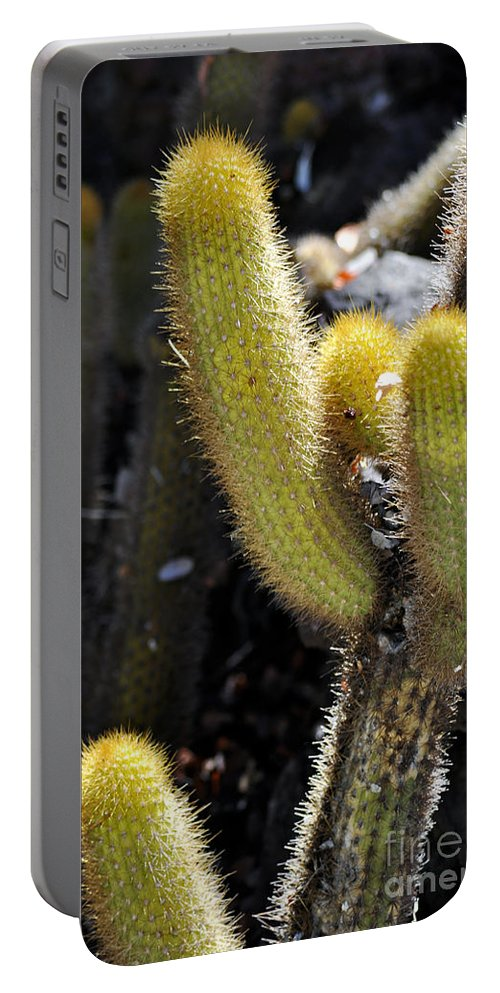 Clay Portable Battery Charger featuring the photograph Happy by Clayton Bruster