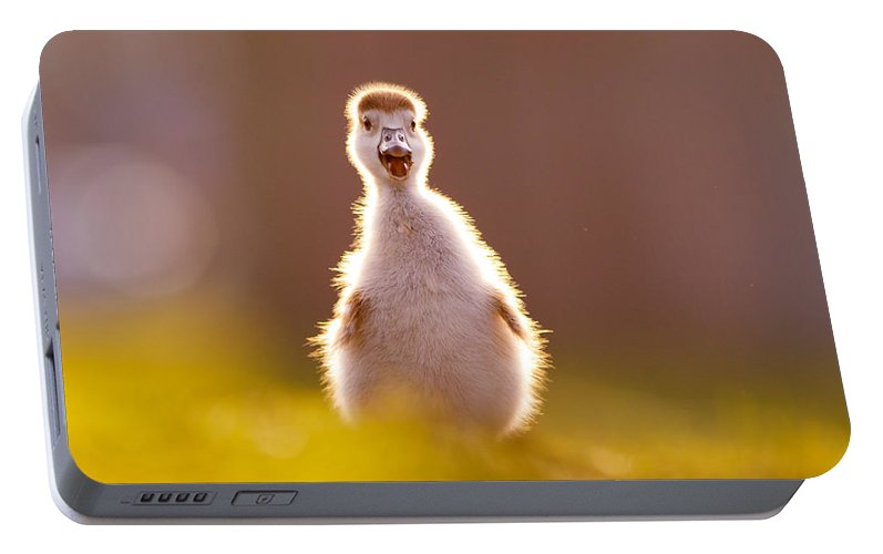3004ea065ba9 Happy Easter - Cute Baby Gosling Portable Battery Charger for Sale by Roeselien  Raimond