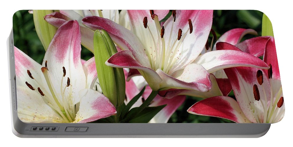 Flower Portable Battery Charger featuring the photograph Happy Lilies by Smilin Eyes Treasures