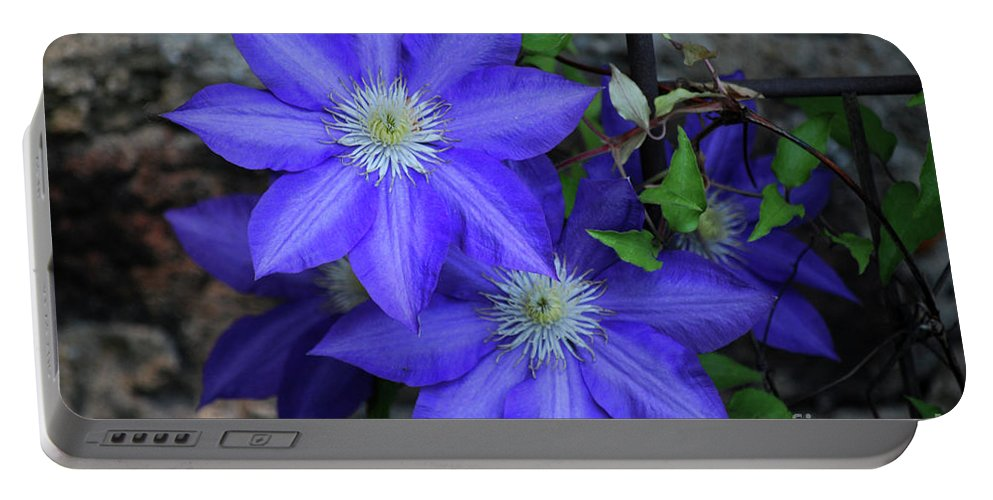 Clematis Portable Battery Charger featuring the photograph Happy To Be Here by Lori Tambakis