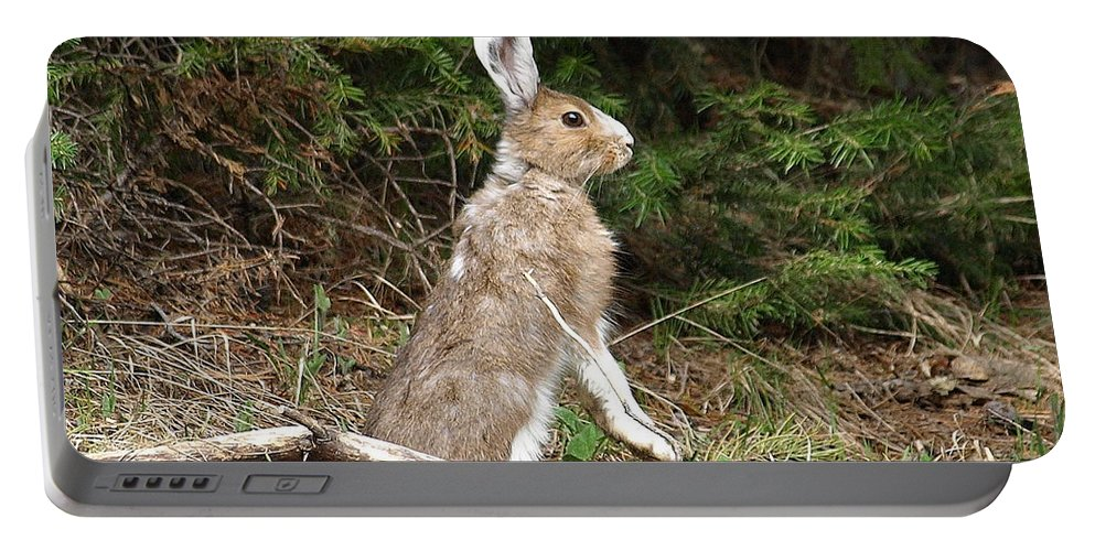 Rabbit Portable Battery Charger featuring the photograph Hare That by DeeLon Merritt