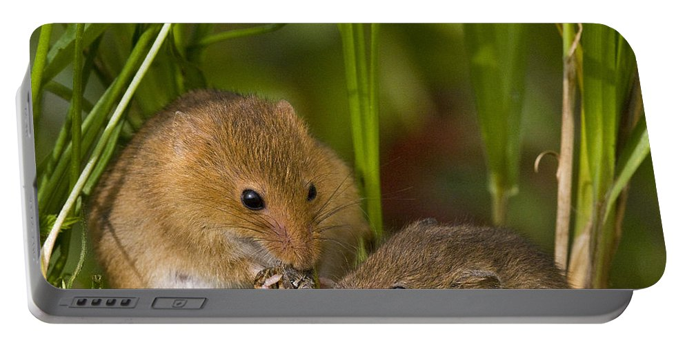 Eurasian Harvest Mouse Portable Battery Charger featuring the photograph Harvest Mice Eating Grasshopper by Jean-Louis Klein & Marie-Luce Hubert
