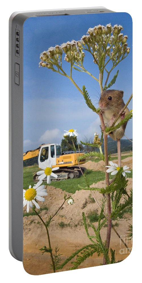 Eurasian Harvest Mouse Portable Battery Charger featuring the photograph Harvest Mouse And Backhoe by Jean-Louis Klein & Marie-Luce Hubert