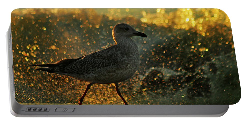 Seagull Portable Battery Charger featuring the photograph Have A Walk By Th Sea by Angel Ciesniarska