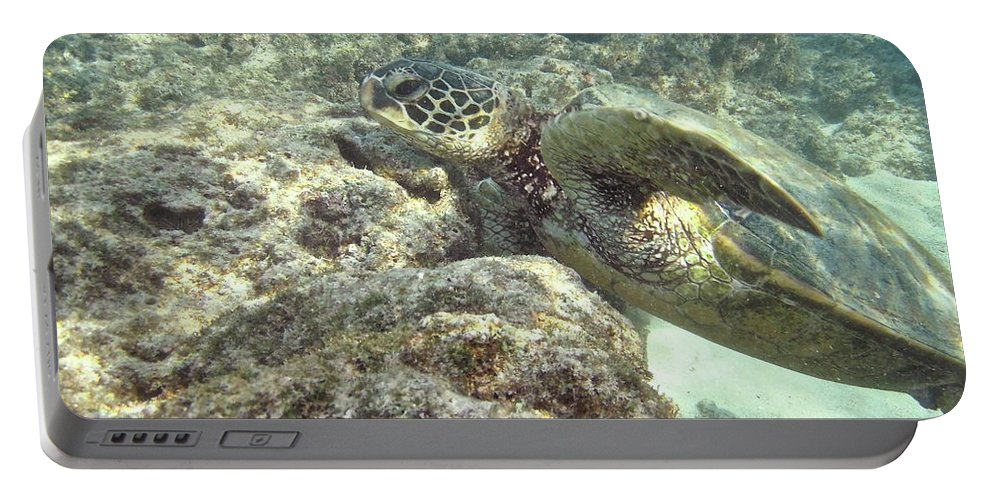 Big Portable Battery Charger featuring the photograph Hawaiian Green Turtle by Michael Peychich