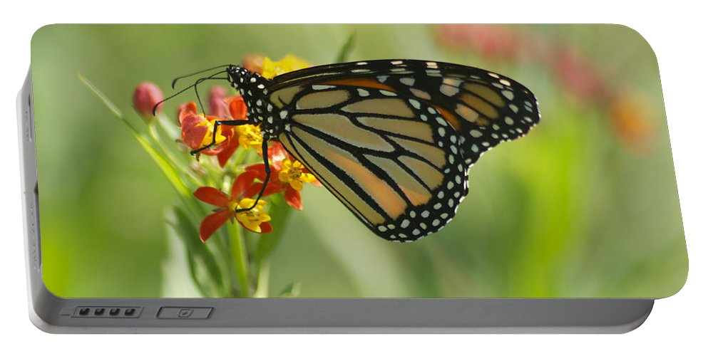 Wildlife Portable Battery Charger featuring the photograph Hawaiian Monarch 1 by Michael Peychich