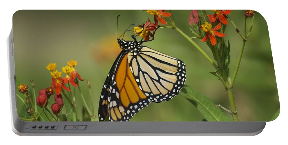 Wildlife Portable Battery Charger featuring the photograph Hawaiian Monarch 2 by Michael Peychich