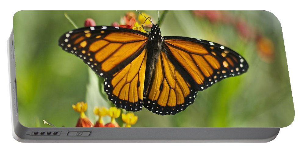 Wildlife Portable Battery Charger featuring the photograph Hawaiian Monarch 3 by Michael Peychich