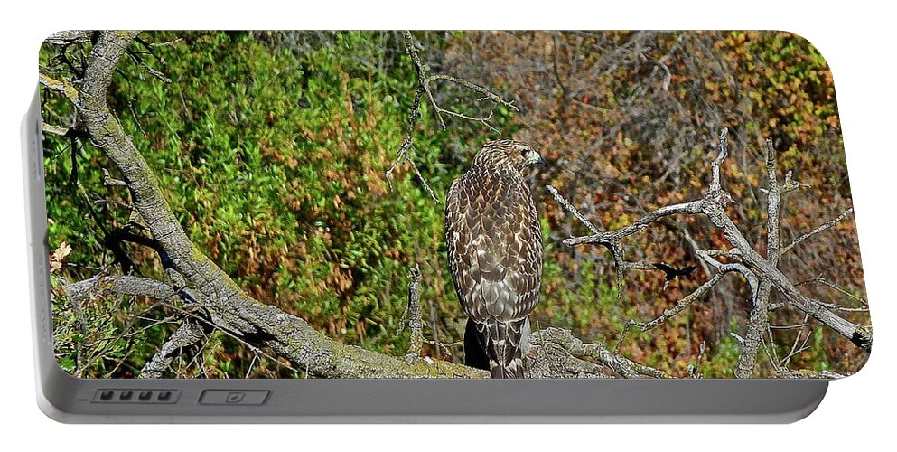 Birds Portable Battery Charger featuring the photograph Hawk In Hiding by Diana Hatcher