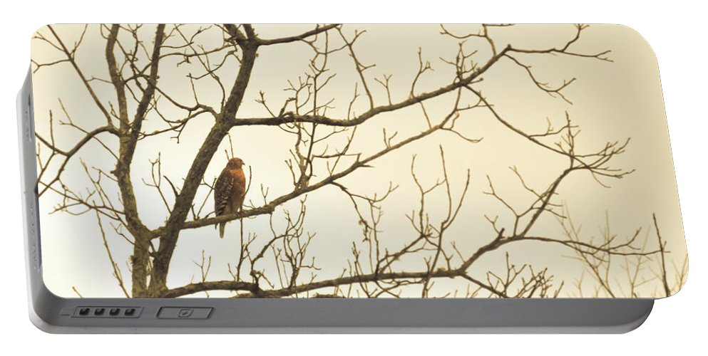Hawk Portable Battery Charger featuring the photograph Hawk by Michelle Rollins