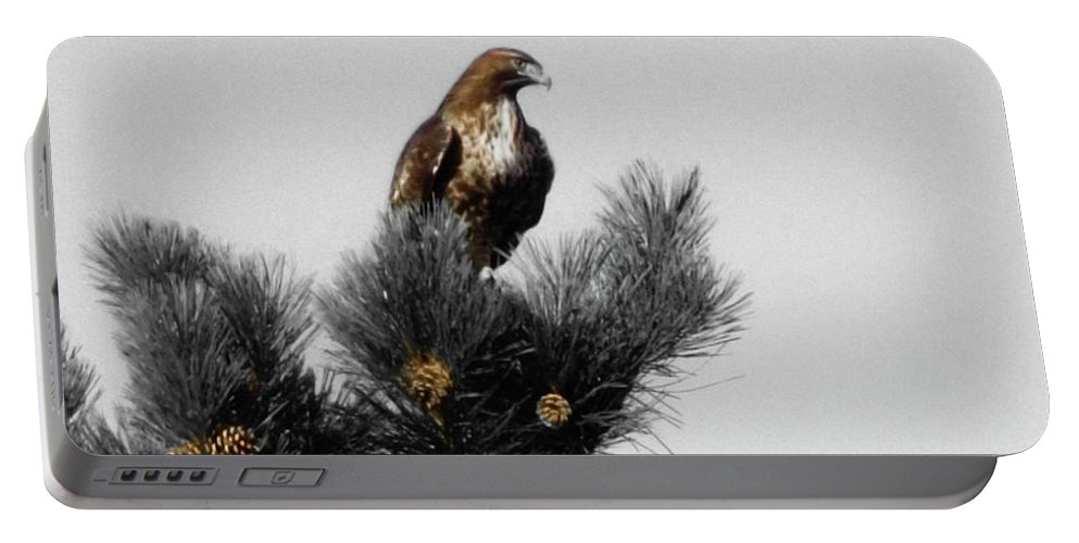 Hawk Portable Battery Charger featuring the photograph Hawking by Chad Vidas