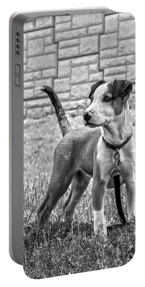 Catahoula Leopard Portable Battery Charger featuring the photograph Hdr America Breed by Justin Mountain