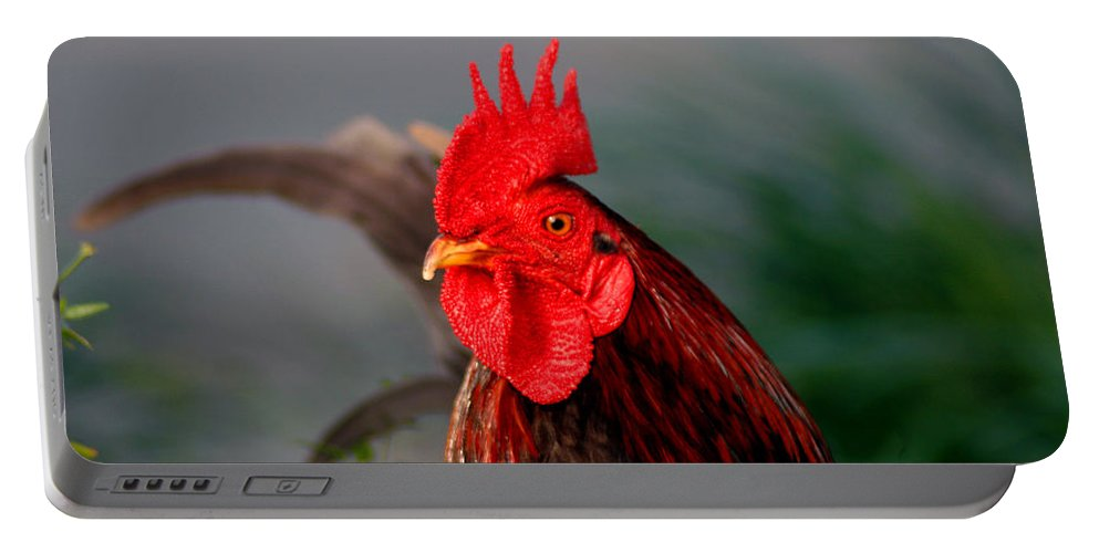 Rooster Portable Battery Charger featuring the photograph He Is The First In The Morning by Susanne Van Hulst