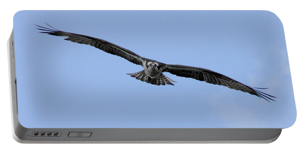 Bird Portable Battery Charger featuring the photograph Head On by Donna Blackhall